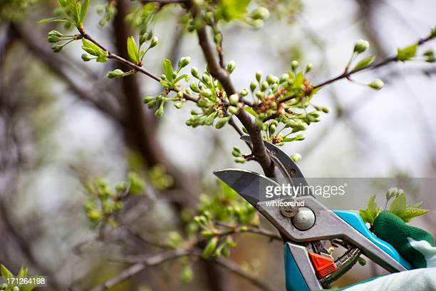 Trust in the Pruning